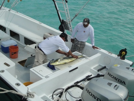 making dorado filet